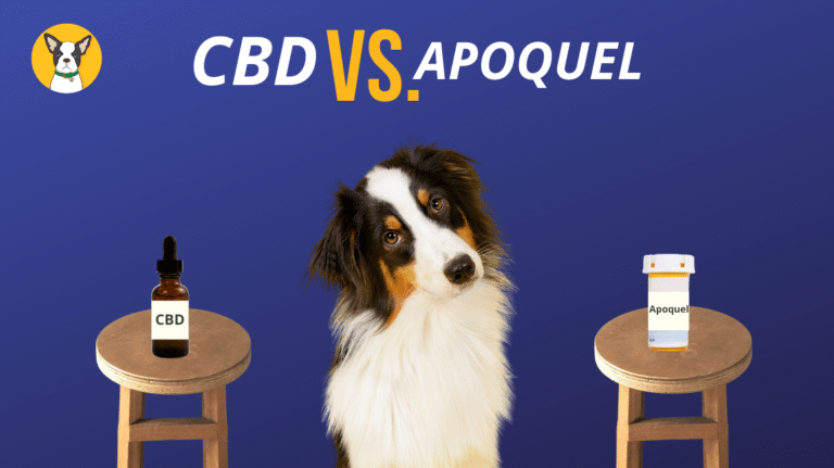 Can CBD Replace Apoquel For Dog Allergies?
