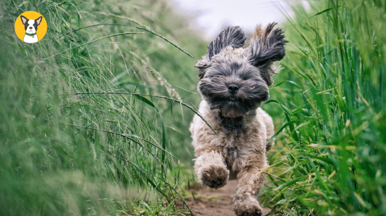 Natural Pain Relief For Dogs