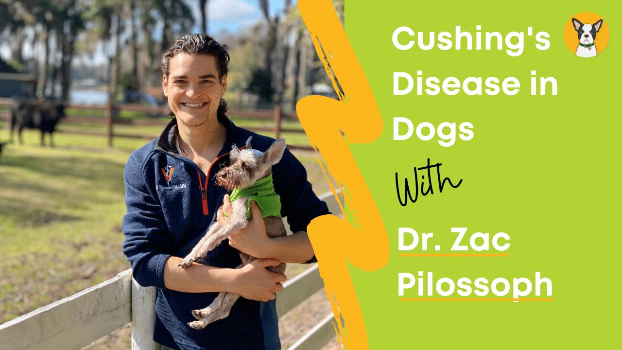 Cushing's Disease in Dogs - Hemp Dog Health