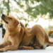 Can CBD Help With Dog Allergies?